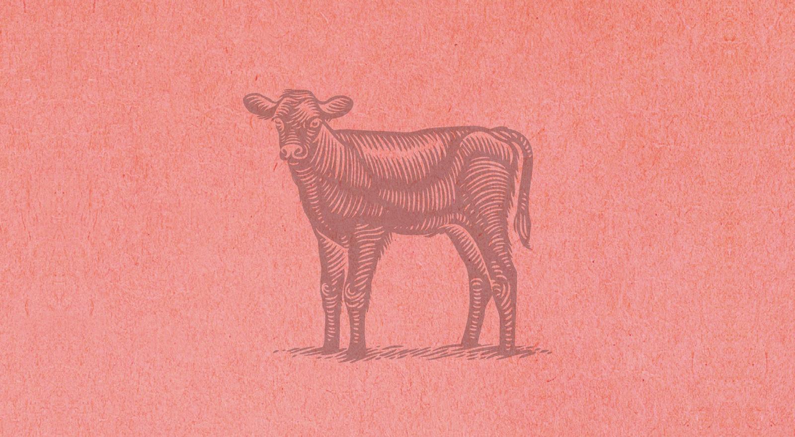Авторская гравюра с изображением теленка продолжает фирменный стиль «Мираторг»